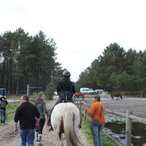 Balade sur des chevaux